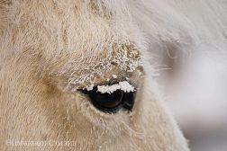 caballo-invierno2