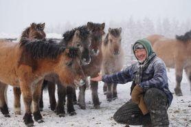 caballos-rusia